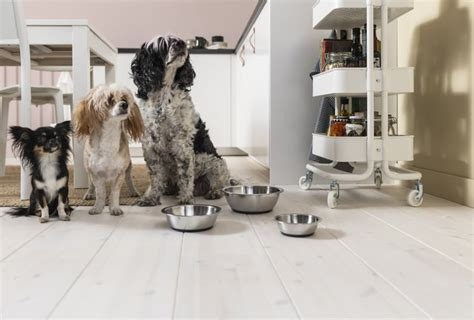 Lurvig Bowl | Ikea Launches New 2019 Lurvig Pet Collection