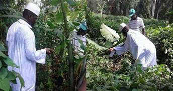 Exiled Yahya Jammeh works on Equatorial Guinea farm 'for