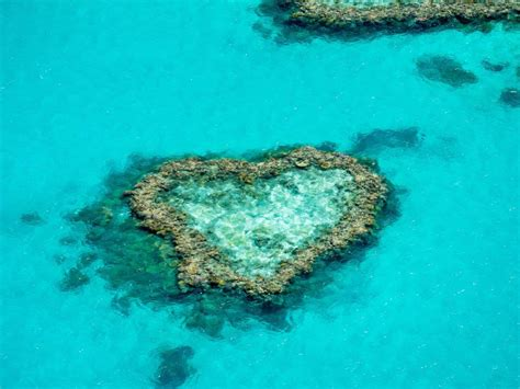 Great Barrier Reef Adventure, Day Tours & Cruises