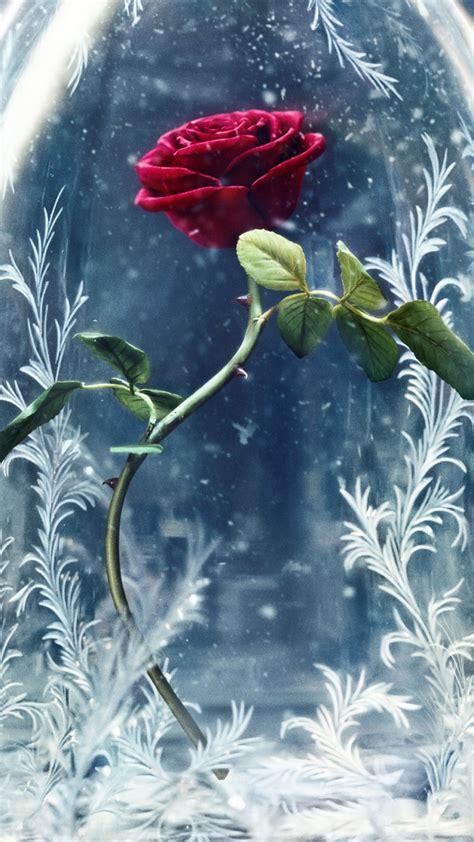Wallpaper Beauty and the Beast, 2017 Movies, Disney, Rose